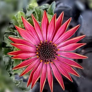 OLI flower 04.jpg