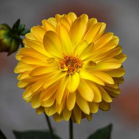 Yellow Harmony.jpg