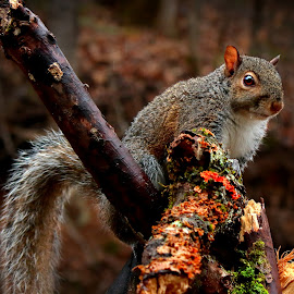 Tree Rat by Paul Mays - Animals Other Mammals