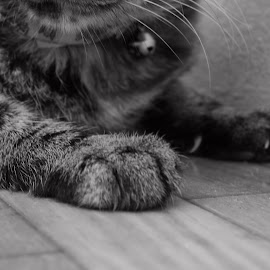 My paws by Idameth Ramos - Animals - Cats Portraits ( cats, b&w, cats paws )