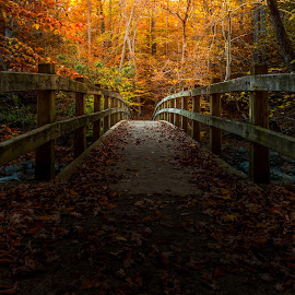 Bridge to Enlightenment by Ed Clark - Landscapes Forests ( eerie, forest, leaves, hiking, rock creek, tree, autumn, serene, fall, creek, outdoors, trees, washington dc, bridge )