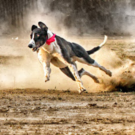 by Abdul Rehman - Animals - Dogs Playing