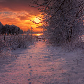 Traces by Rune Askeland - Landscapes Sunsets & Sunrises ( canon, clouds, winter, snow, traces, trees, sunrise )