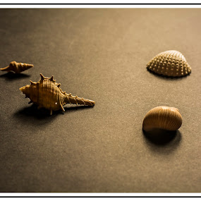 Once upon a time - I was Alive by Priyank Jha - Artistic Objects Other Objects ( abstract, shell, priyank jha photography, nikon d7100, india, nikon )