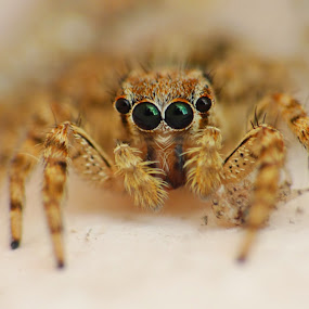Spider by Brijesh Shivashankar - Novices Only Macro