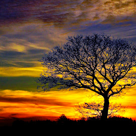 Tree in sunset by Kim Moeller Kjaer - Landscapes Sunsets & Sunrises