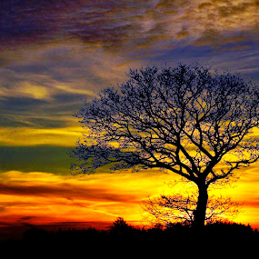 Tree in sunset by Kim Moeller Kjaer - Landscapes Sunsets & Sunrises