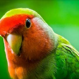 Whats Up by Ken Nicol - Animals Birds