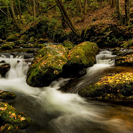 Squally Creek by Jonathan Wheeler - Landscapes Waterscapes ( nantahala national forest, mountain streams, scenic north carolina, blue ridge mountains, squally creek )