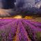 lavanderfarm_clouds1.jpg