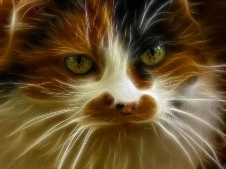 My Cat Enhanced by Alex Graeme - Digital Art Things ( fractalius, cat, betty boo )