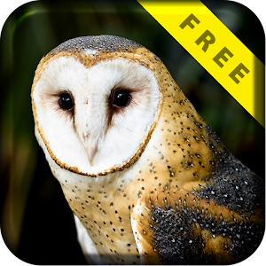 Barn Owl Flight Live Wallpaper