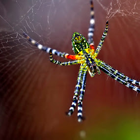 ... by Agus Wahyudi Photoworks - Animals Insects & Spiders