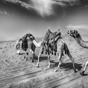 White Desert by Tawfik Dajani - Landscapes Deserts