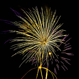Green And Purple Celebration by Brenda Hooper - Abstract Fire & Fireworks ( abstract, purple, green, 4th of july, fireworks, independence day, fire,  )
