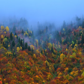 Autumn by Tomasz Budziak - Landscapes Forests ( landscapes, georgia, autumn, forests )