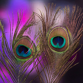Feather Touch by Rakesh Syal - Artistic Objects Other Objects