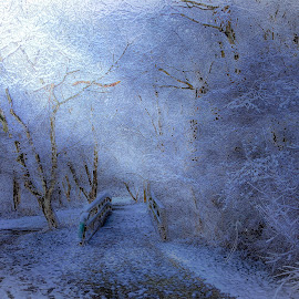 Snow in Indiana  by Brock Willis - Landscapes Weather ( amazing, love, indiana, winter, park, cold, awesome, snow, beauty, like, landscape, pretty, snowing )