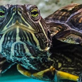 by Austin Lubetkin - Animals Amphibians
