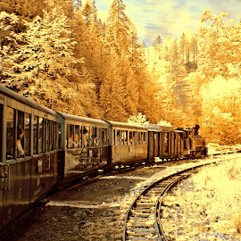 Mocanita (IR) by Gabriel Tocu - Transportation Trains ( train tracks, train, transportation )