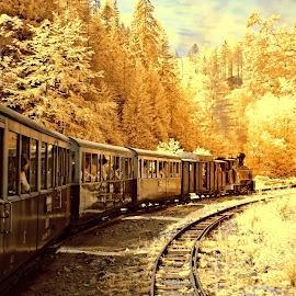 Mocanita (IR) by Gabriel Tocu - Transportation Trains ( train tracks, train, transportation,  )