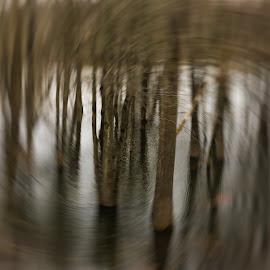 Flooded Trees by Nancy Merolle - Digital Art Places ( flood, digital art, art, trees, woods, spring )