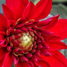by Barbara Horner - Flowers Single Flower (  )