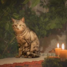 King by Martin Dvořák - Animals - Cats Portraits