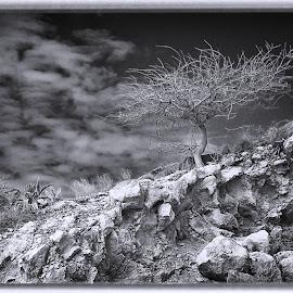 The Tree by Al Duke - Black & White Landscapes ( tree, haiti )
