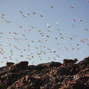 fly by Mad Coize - Animals Birds ( bali, fly, indonesia, garbage, birds, animal )