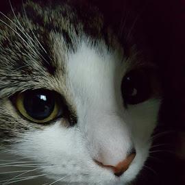by Lorraine Stockham - Animals - Cats Portraits