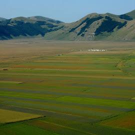 Castelluccio 25 by Bruno Brunetti - Landscapes Prairies, Meadows & Fields ( meadows, valley, flowers, italy, castelluccio,  )