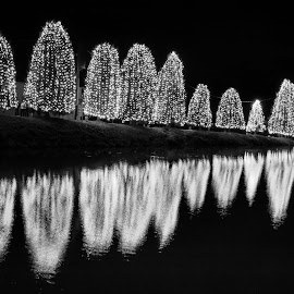 Christmas 2016 by Rananjay Kumar - Public Holidays Christmas ( #landscape, #light, #2016, #lowlight, #lastyear, #waterscape, #holiday, #canon, #lights, #longexposer, #christmas )