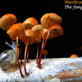 Mushrooms... by Asif Bora - Typography Captioned Photos