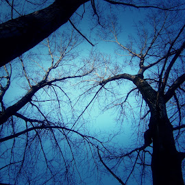 Branches by Ratimir Knezevic - Landscapes Forests