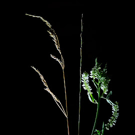 *** by Jurijs Ratanins - Instagram & Mobile Android ( mobilography, nature, grass, light, flower )