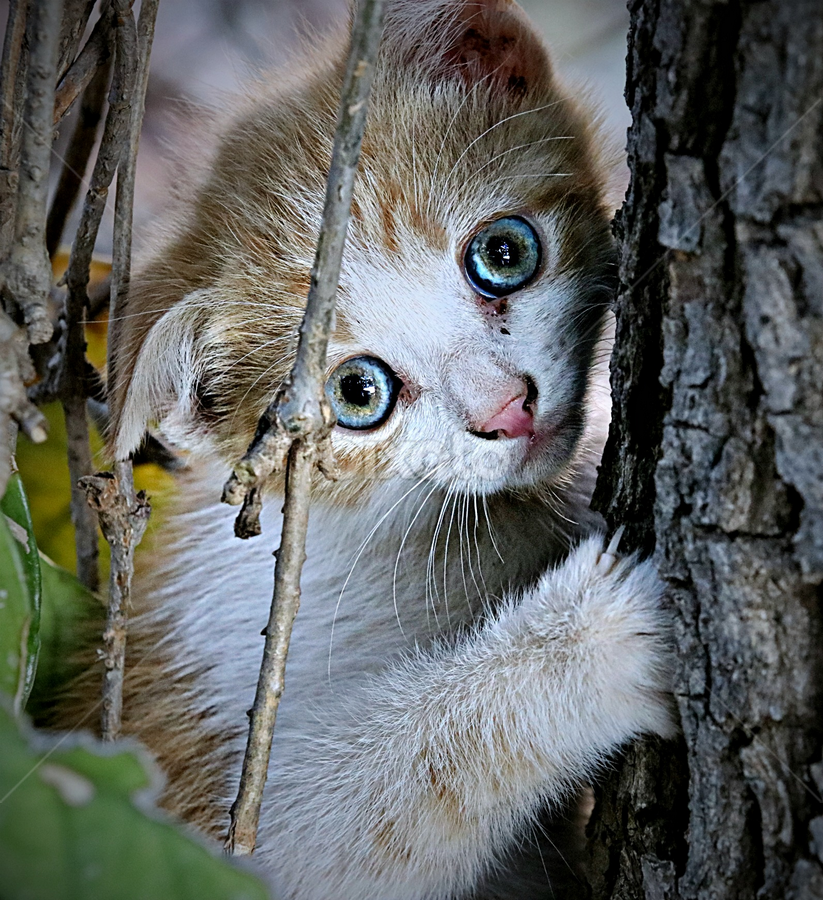 Help! I'am stuck! by Pieter J de Villiers - Animals - Cats Kittens