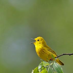Joy by Larry Kaasa - Animals Birds