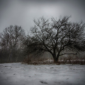 Soggy Tree by Jason Weagle - Landscapes Prairies, Meadows & Fields ( isolated, solo, tree, snow, bush, landscape, lonely, lonesome )