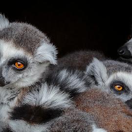 by Kennet Brandt - Animals Other Mammals