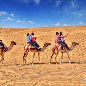 Journey in the Desert by Nazir Gohar - Landscapes Deserts ( camel, desert, sky, beautiful, landscape, hdre, people, nikon d90, photography )