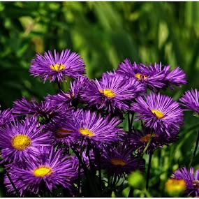 by Doreen L - Flowers Flower Gardens (  )