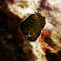 Gold-speckled flatworm