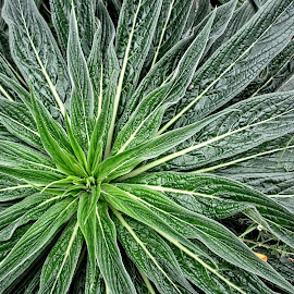 MGI plant 02 by Michael Moore - Nature Up Close Other plants (  )