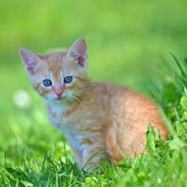 kotě by Jitka Rosslerová - Animals - Cats Kittens ( kotě )