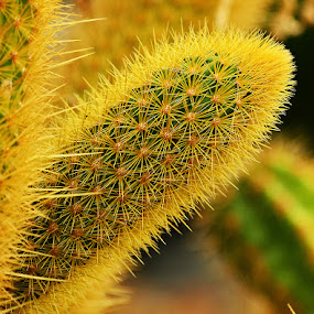 Cactus by Naveen Naidu - Nature Up Close Other Natural Objects (  )