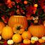 by Brandi Nichols - Public Holidays Halloween ( pumpkin, halloween )