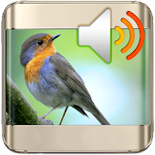 APK App Birds Sounds Nature Ringtones for BB, BlackBerry