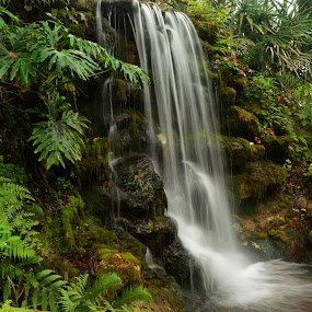 Tropical Delight by Robert Coffey - Landscapes Waterscapes ( tropical, foliage, green, stream, florida, waterfall,  )