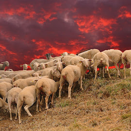 Peur de l'orage by Gérard CHATENET - Digital Art Animals